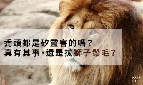 無矽靈洗髮精可以治禿頭!?是真有其事還是拔獅子鬃毛?