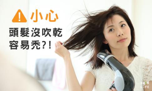 頭髮自然乾會禿!?想預防禿頭就要吹乾頭髮!