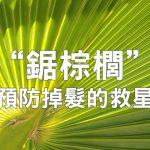 聽說鋸棕櫚是預防禿頭的天然救星?詳談鋸棕櫚的效果